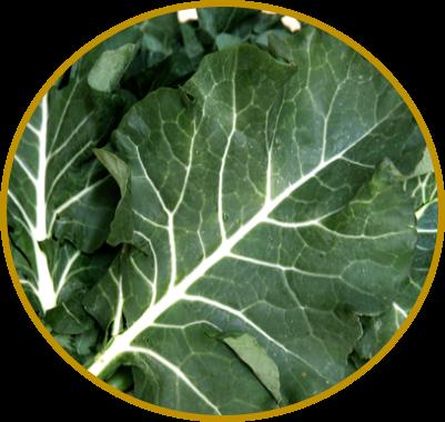 suco verde de couve