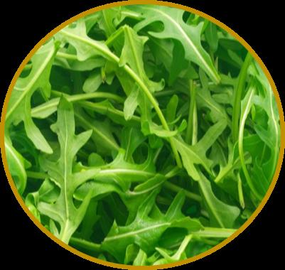 suco verde com rúcula
